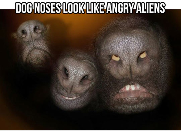 a funny dog noses
