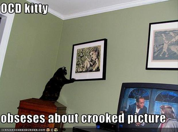 a funny ocd pictures, cat pictures