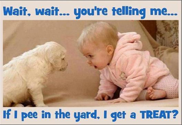 a funny pictures, baby and puppy