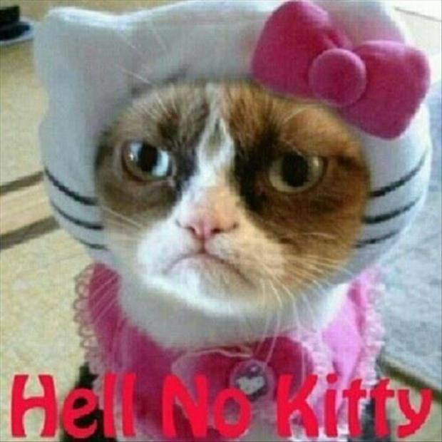 a grumpy cat, hello kitty