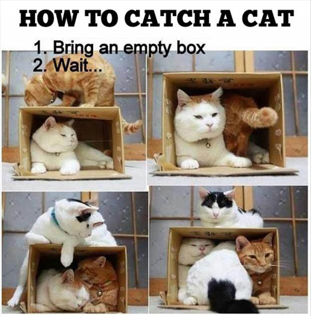 a how to catch a cat, funny pictures