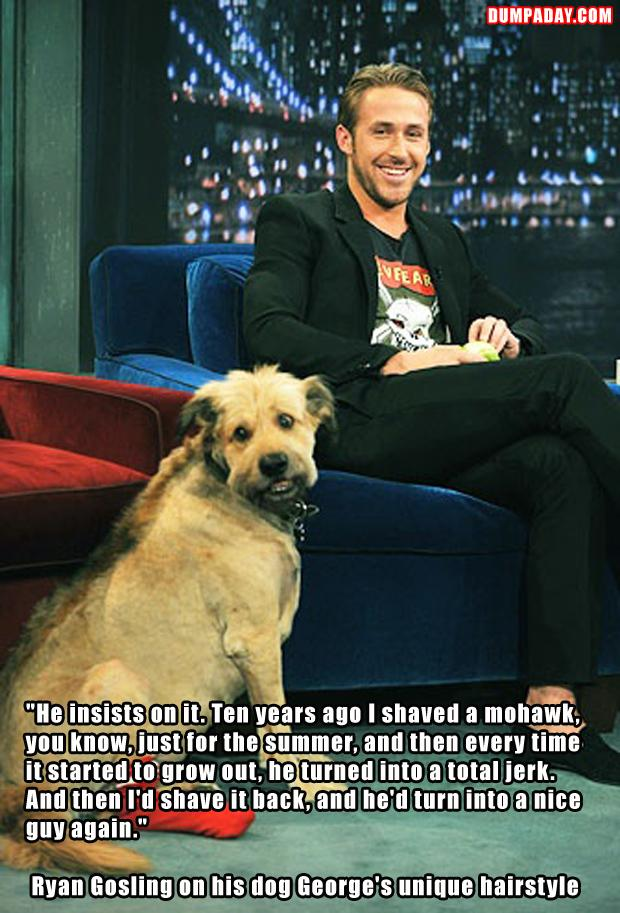 a ryan gosling and his dog, funny quotes