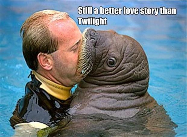 a walrus, better love story than twilight