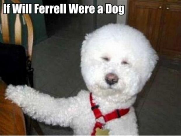 a will ferral dog, funny pictures