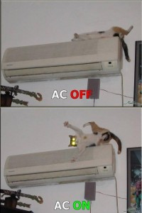 air conditioner cat funny pictures