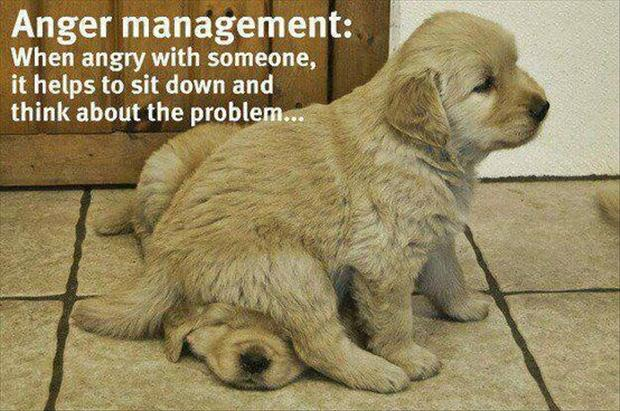 anger management, funny dogs