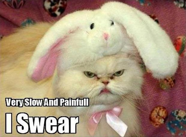 angry cat, funny bunny hat