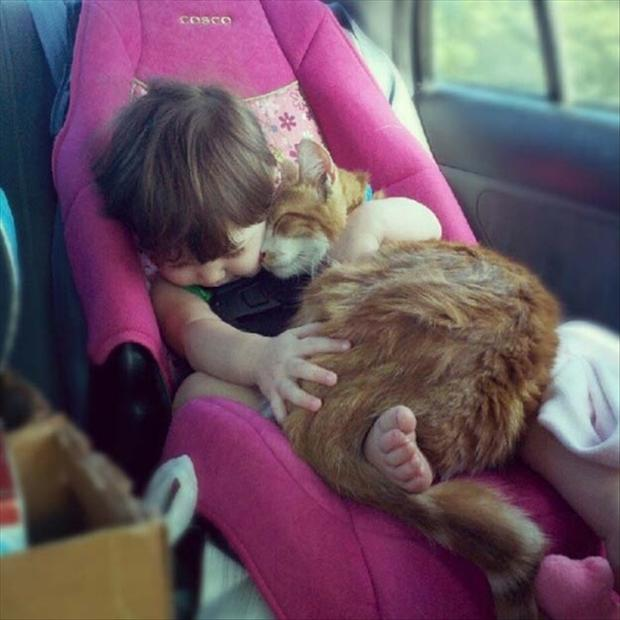 baby and cat sleeping, funny pictures