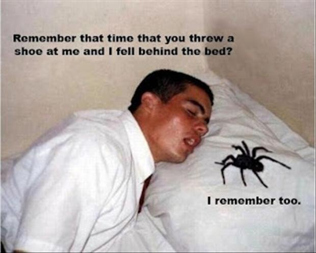 big spider, funny pictures