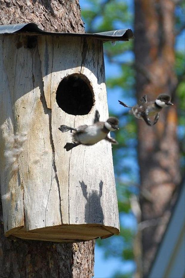 birds flying, perfectly timed photos