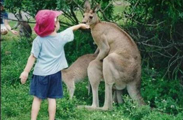 boy feeds kangaroo