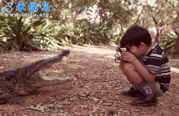 boy takes picture of alligator