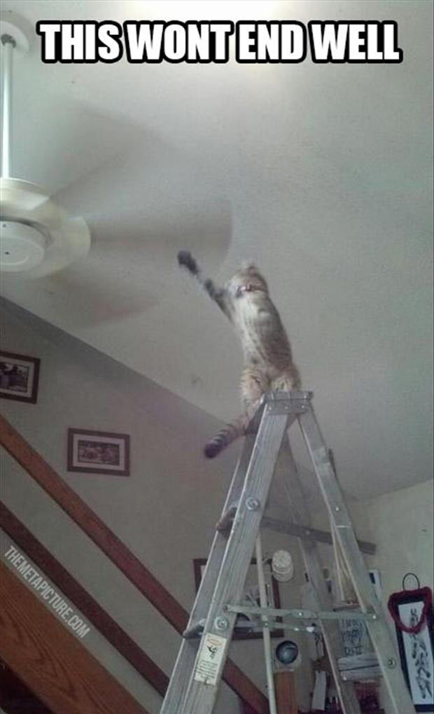 cat, ceiling fan, funny pictures