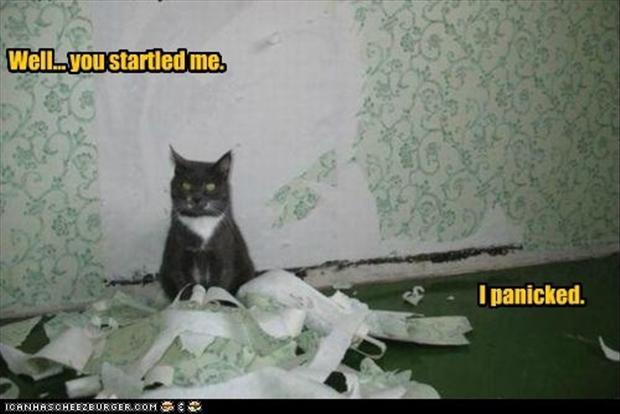 cat destroys wallpaper, funny pictures