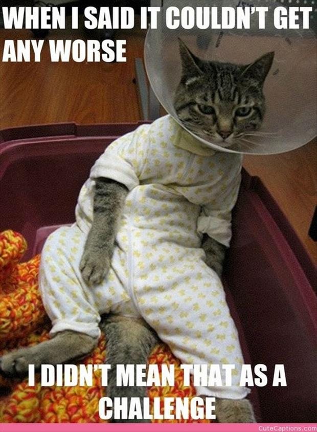 cat in a cone, funny pictures