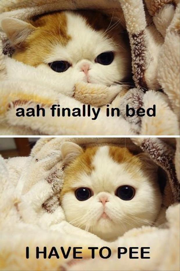 cat in bed, funny pictures