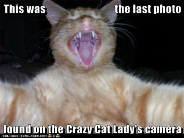 cat lady, funny cats
