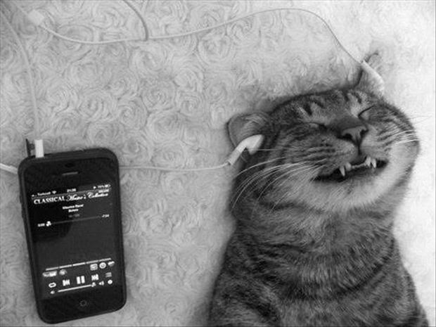 cat listening to headphones, funny animal pictures