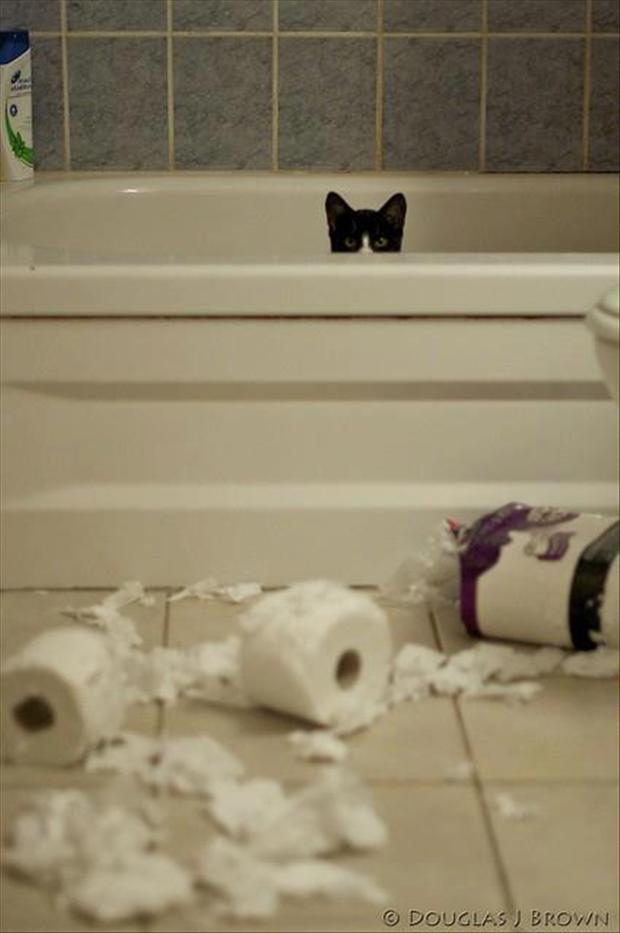 cat made a mess in the bathroom, funny pictures
