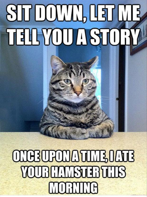 Funny Cat Quotes With Pictures