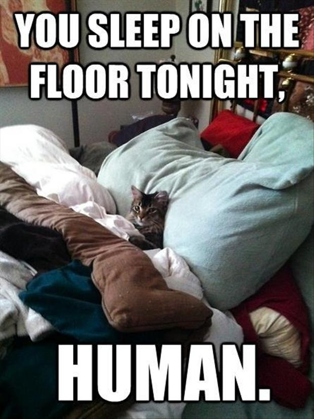 cat sleeping in your spot, funny cats