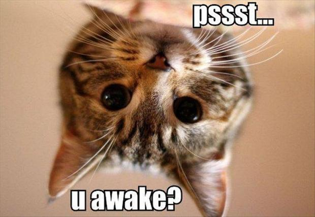 cat wakes you up, funny cats