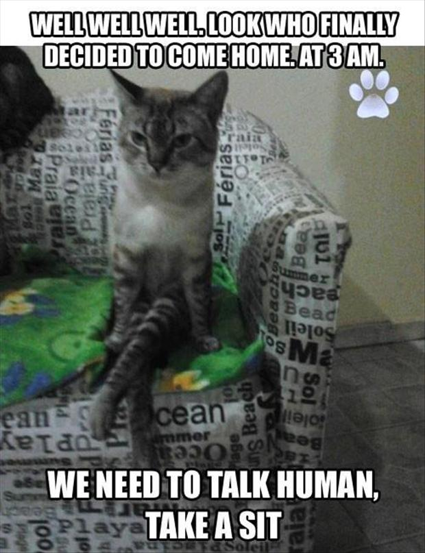 cat wants to talk, funny lolcats