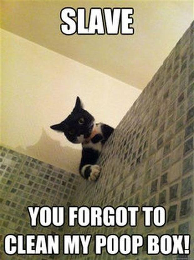 cat watches you in the shower, funny pictures