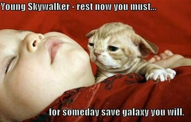 cat yoda, young skywalker funny star wars picture