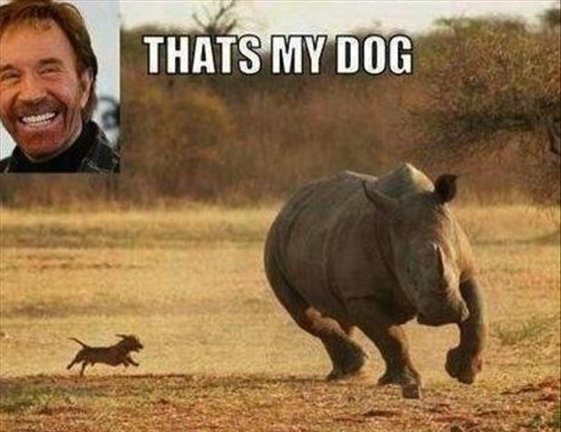 chuck norris, funny dog pictures