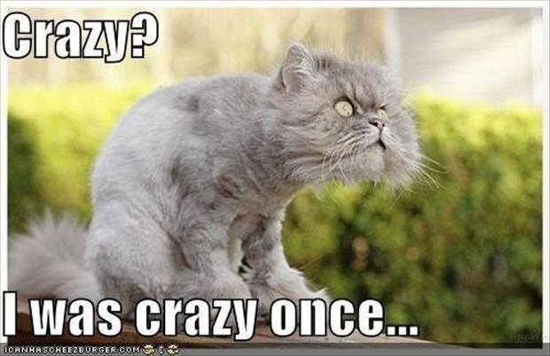 crazy cat, funny pictures