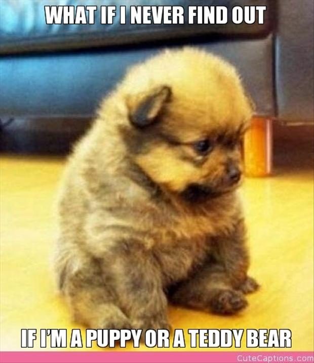 cutest puppy ever, funny pics
