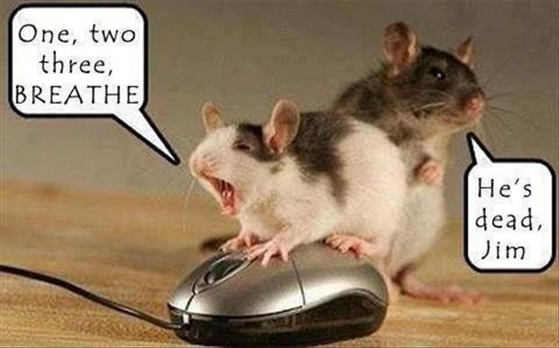 dead mice, funny pictures