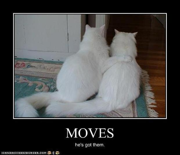 demotivational posters, cats