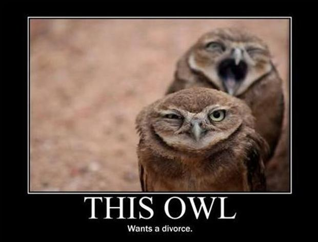 demotivational posters, funny owls