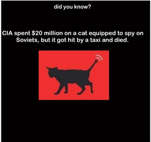 did you know, cia spent 20 million dollars on a cat spy, but it died