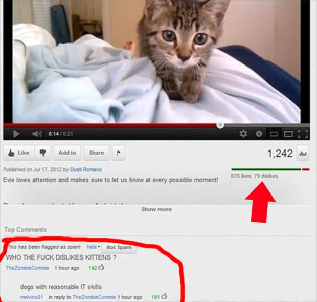 dislikes kittens, funny youtube comments