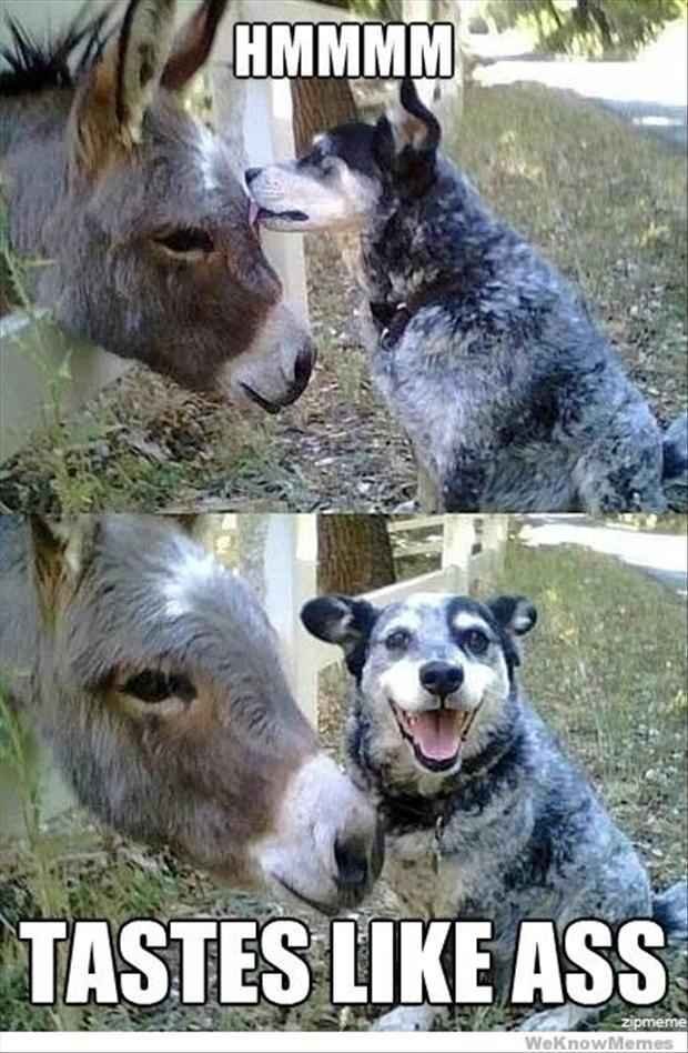 dog and donkey, funny pictures