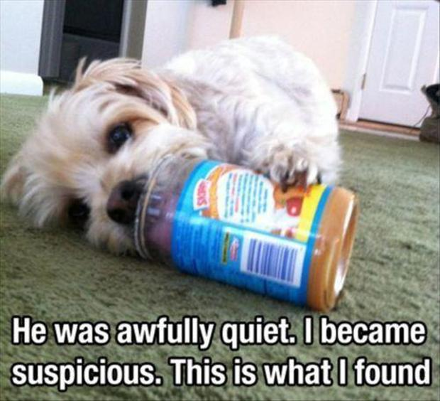 dog eating peanut butter, funny pictures