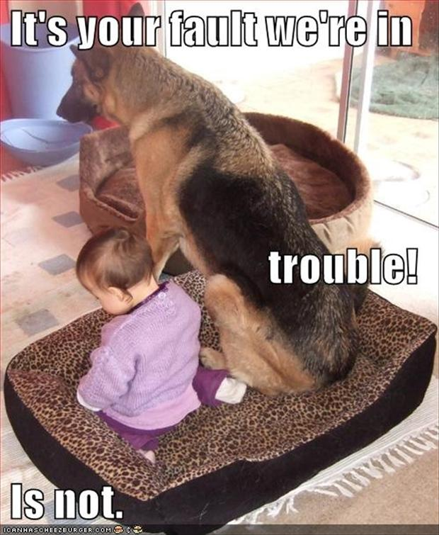 dog is in trouble, funny pictures