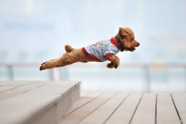 dog jumping, perfectly timed pictures
