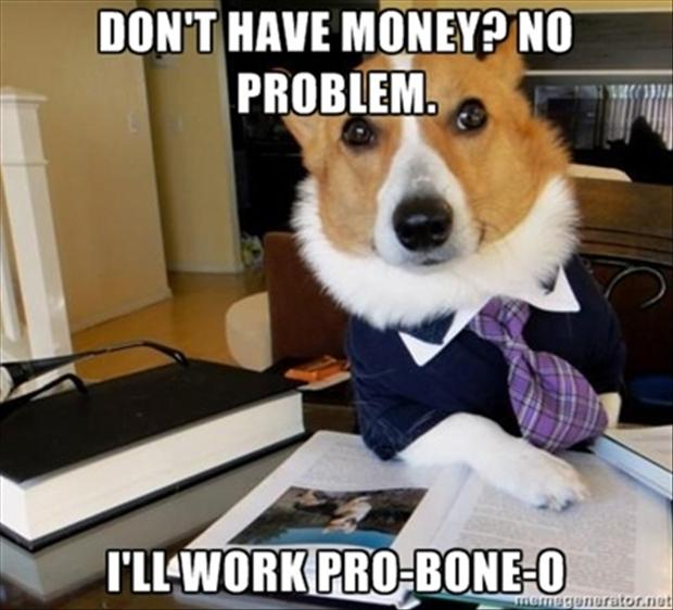 dog lawyer meme