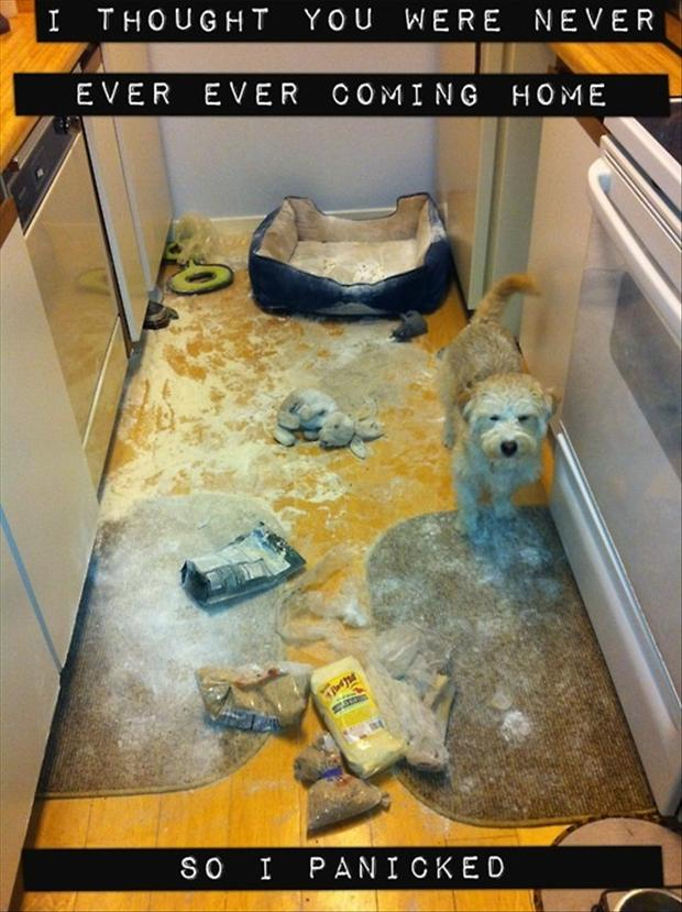 dog made a mess, funny pictures