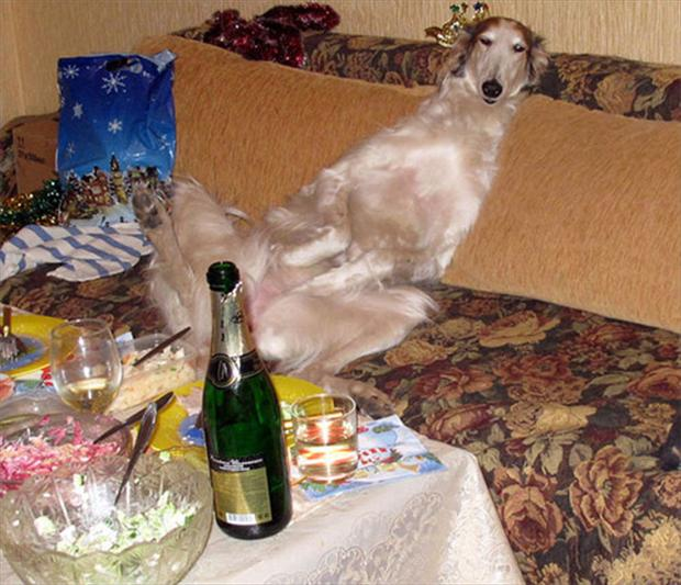 dog party, wtf animal pictures