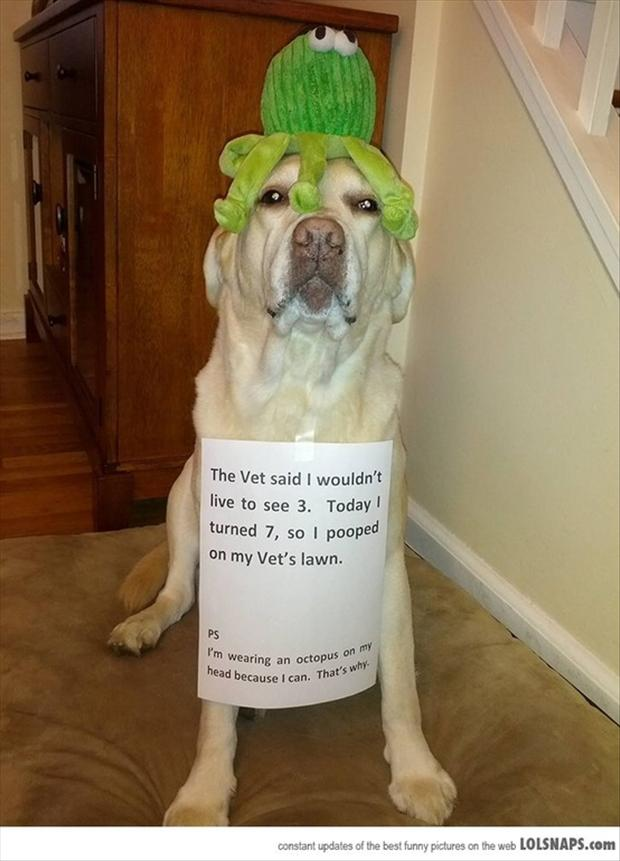 dog pooping, dog shaming