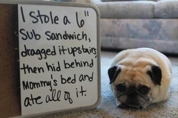 dog shaming, funny (2)