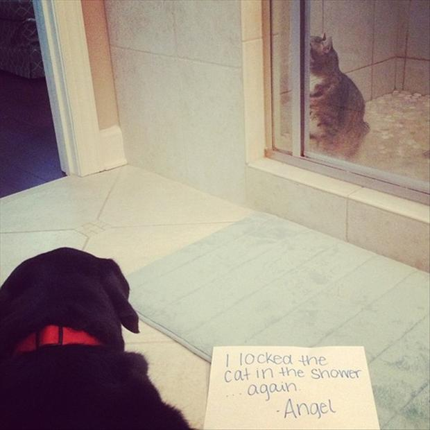 dog shaming, funny dogs vs cats