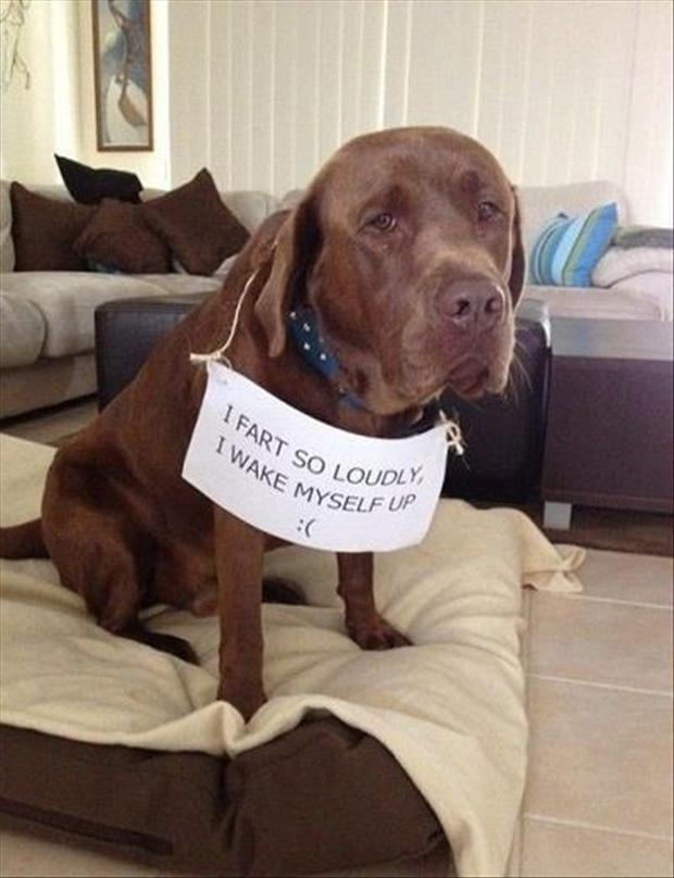 dog shaming, funny notes
