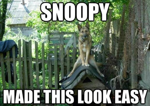 dog sitting on dog house, funny pictures
