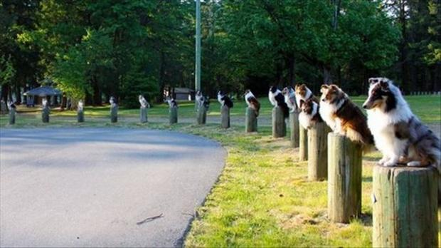 dogs sitting on posts at park, wtf pictures